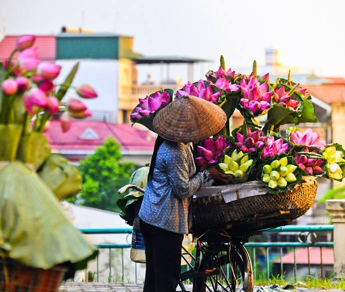 Lotus bike flower in summer - Romantic Hanoi city tour