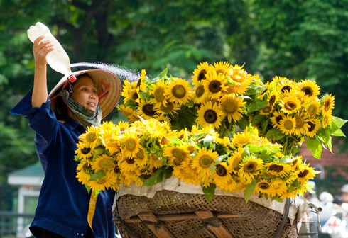 Sunflower bike in Hanoi street - Romantic Hanoi city tour