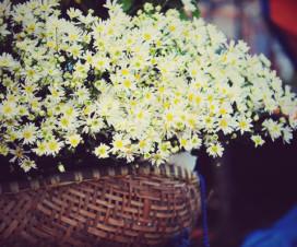 Hoa Mi Flower - Hanoi city tour