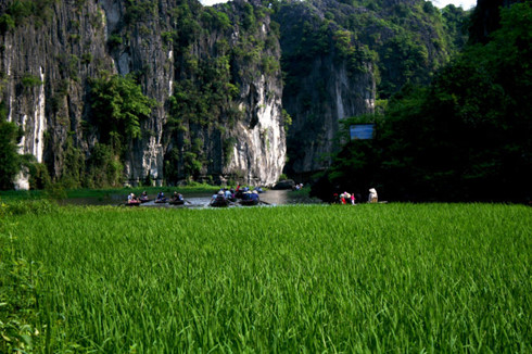 Green fields inside Ngo Dong River - Tour from Hanoi
