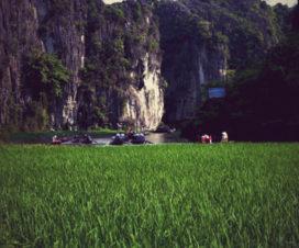 Tam Coc in green rice season - Tour from Hanoi