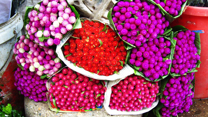 Colorful flowers at Quang Ba Flower Market - Things to do in Hanoi