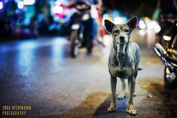 Dog on the Hanoi Road - Hanoi traffic & tours in Hanoi