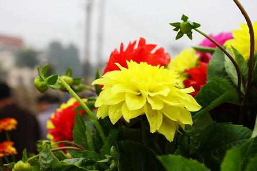 Hanoi Spring Flower on Vietnam Tet Holiday - Hanoi city tour 1