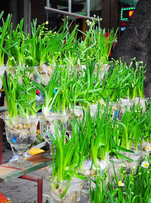 Hanoi Spring Flower on Vietnam Tet Holiday - Hanoi city tour 2