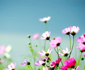 Hanoi Spring Flower on Vietnam Tet Holiday - Hanoi city tour 3