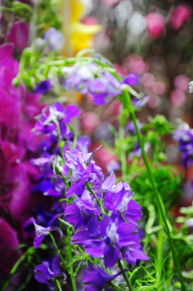 Hanoi Spring Flower on Vietnam Tet Holiday - Hanoi city tour 4