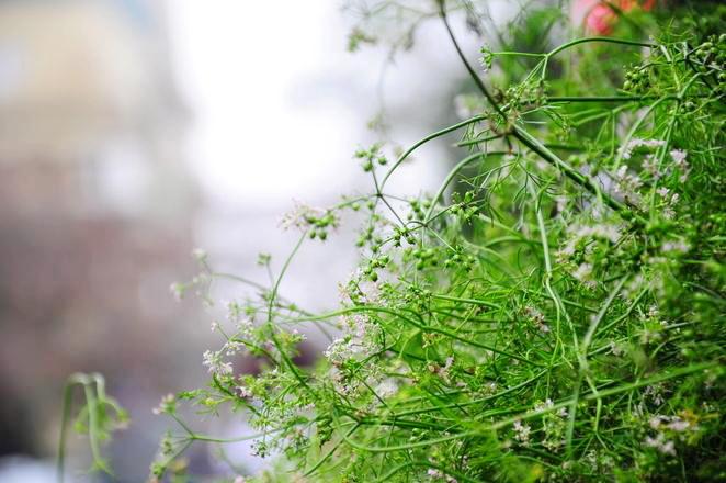 Hanoi Spring Flower on Vietnam Tet Holiday - Hanoi city tour 5