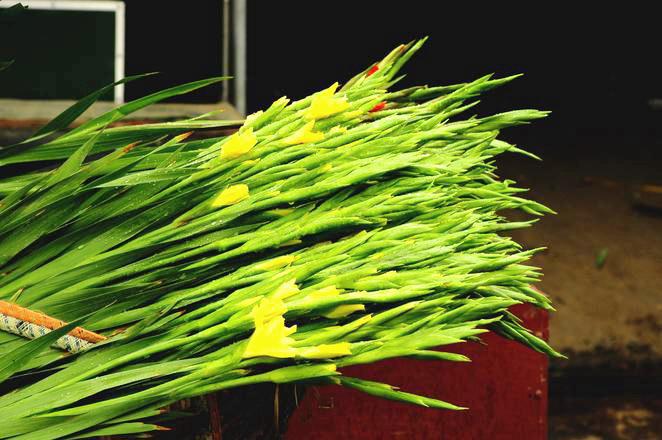 Hanoi Spring Flower on Vietnam Tet Holiday - Hanoi city tour 6