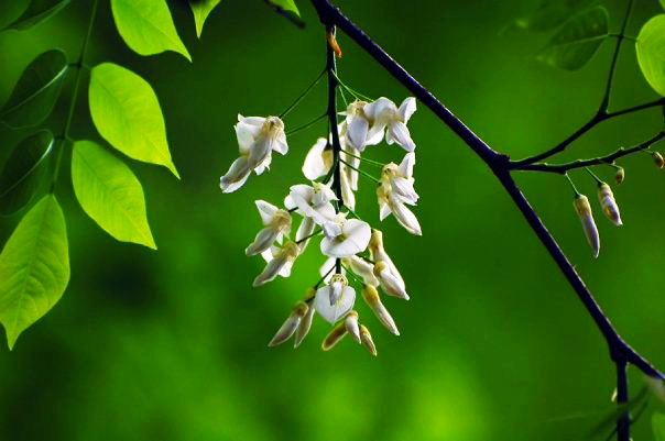 Hanoi Spring Flower on Vietnam Tet Holiday - Hanoi city tour 9