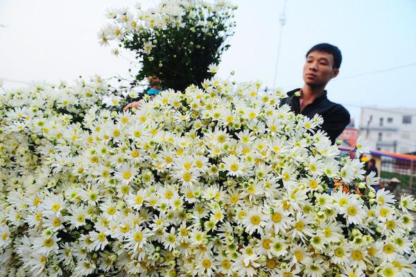Another season of ox-eye daisies comes to Hanoi