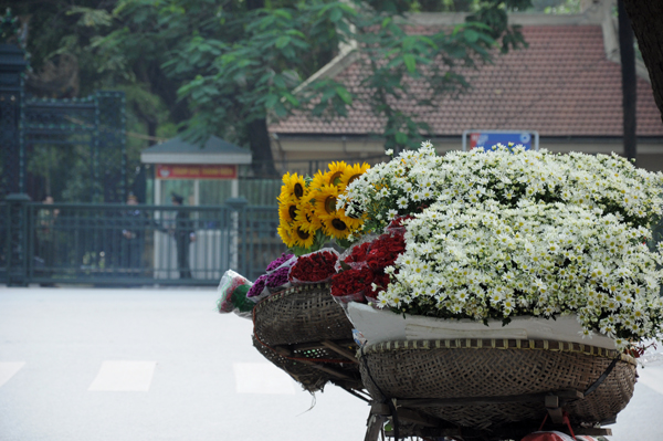 Bicycles bringing ox-eye daisies along streets - Hanoi attractions