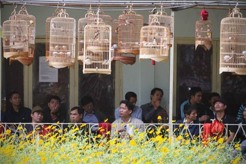 Bird catering and watching - an elegant hobby of Hanoians