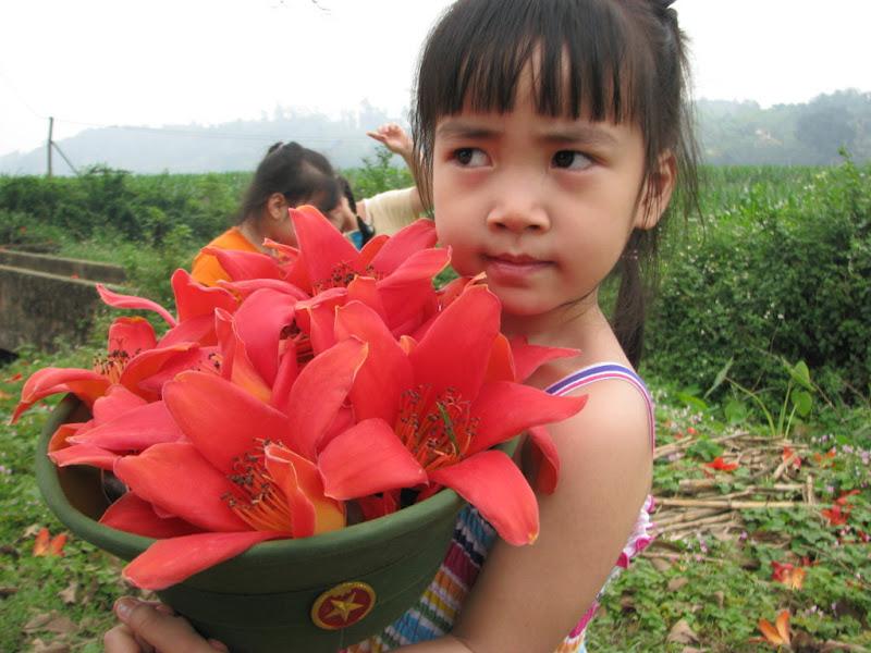bombax flowers in Hanoi - Hanoi travel