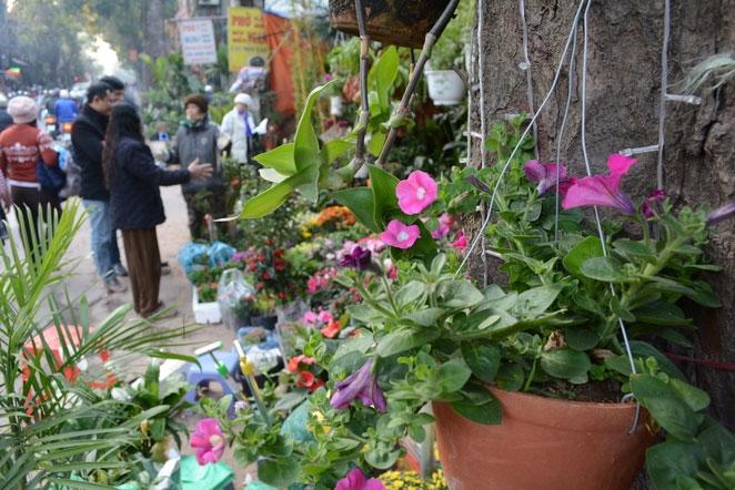 Bustling Hoang Hoa Tham Street - Hanoi in Tet - things to do in Hanoi