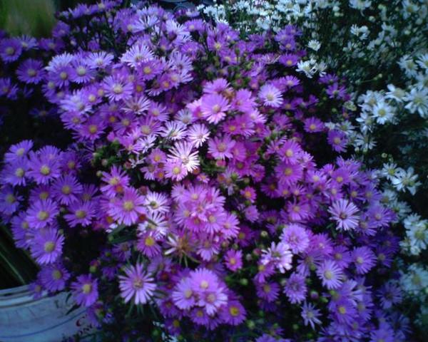 hanoi-with-seasonal-flowers