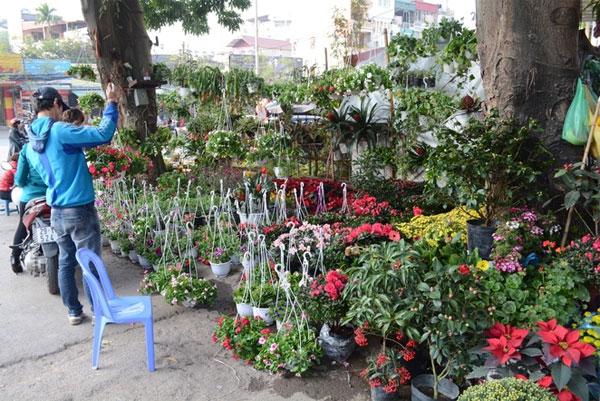 Hoang Hoa Tham Flower Street upon Tet arrival - Hanoi