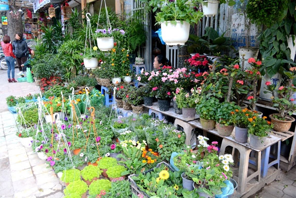 Hoang Hoa Tham Street covered with colorful flowers - Hanoi attractions
