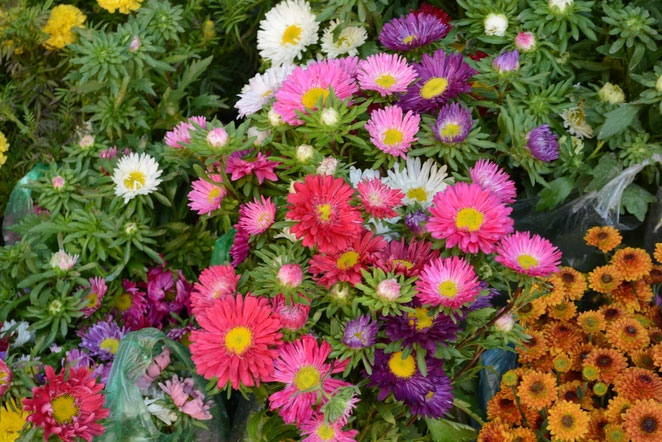 Flowers on sales in Hoang Hoa Tham Street - where to visit in Hanoi