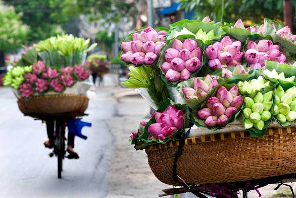 Lotus bikes along streets in summer in Hanoi - things to do in Hanoi