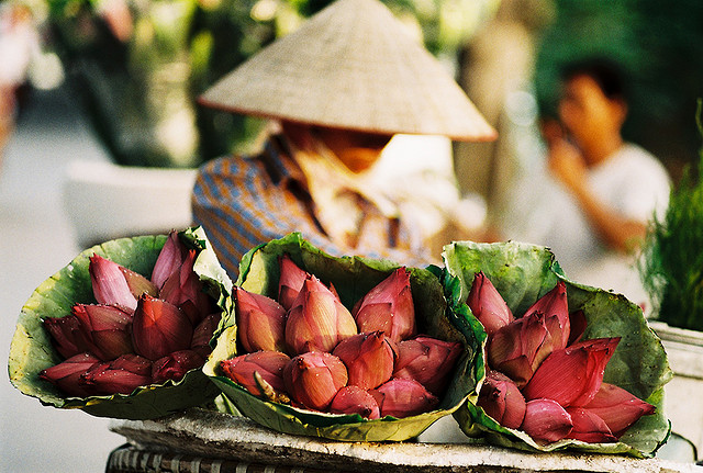 Lotuses reaches doors of locals - things to see in Hanoi