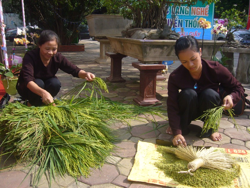 Making green young sticky rice flakes in Vong Village - Hanoi food tours