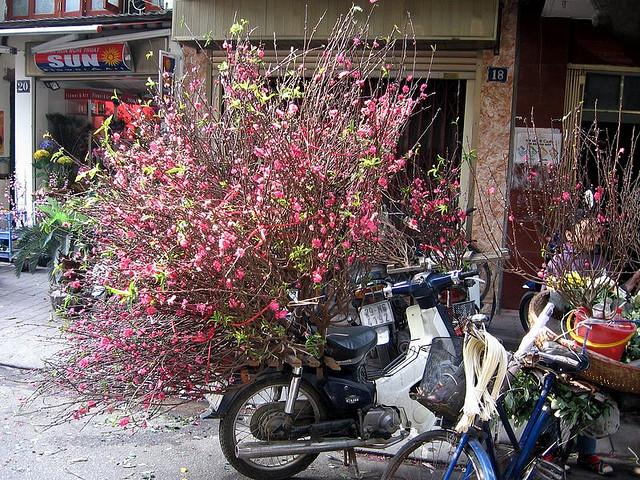 peach-blossom-bikes-during-hanoi-tet-preparation-time