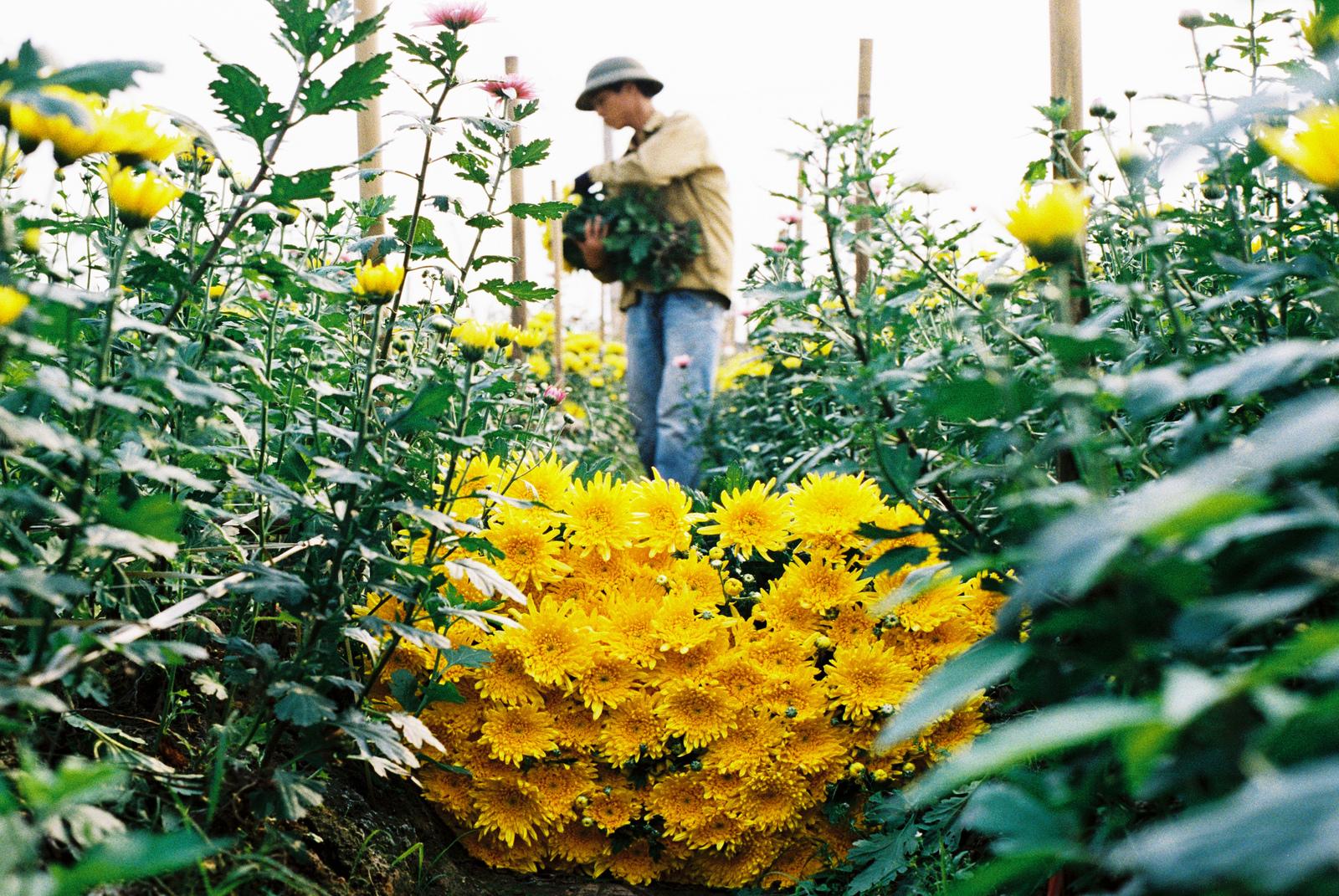 Tay Tuu flower garden in Hanoi - hanoi day trips