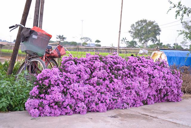 Tay Tuu flower garden - Hanoi city tours