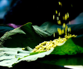 Young green stickly rice flake of Vong Village - hanoi food tours